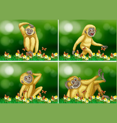 Cute gibbon in four scenes vector