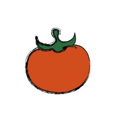 fresh tomato vegetable vector image vector image