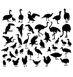 Silhouette of birds and poultry animal vector