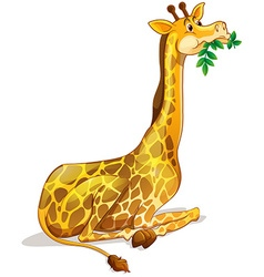 Cute giraffe chewing on leaves vector