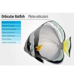 Orbicular batfish vector