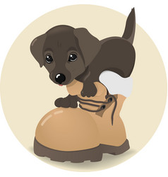 puppy sitting in a boot the dog gets out of the vector image vector image