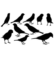 Set of different sparrows vector