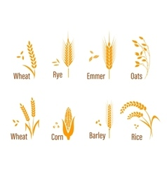 Cereals icon set vector