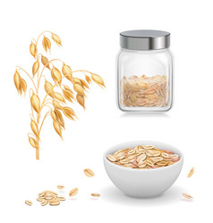 Oats oat flakes in glass oatmeal and muesli vector