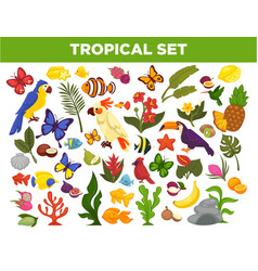 Tropical and exotic fruits birds fishes and vector