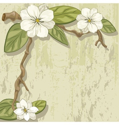 white magnolia vector image
