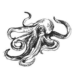 Hand sketch octopus vector
