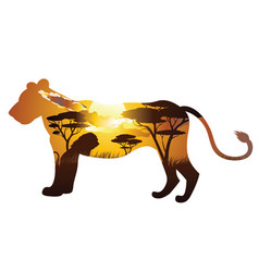African sunset with lion vector