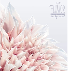 Dahlia flower background 2 vector