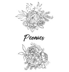 Set of bouquets peonies vector