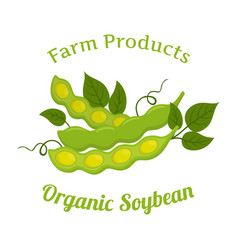Natural organic soybeans made in flat style vector