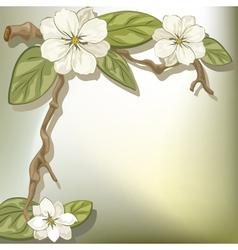 white flowers vector image