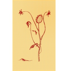 Dried flowers vector