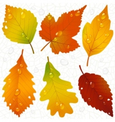 autumn leaves and seaml vector image