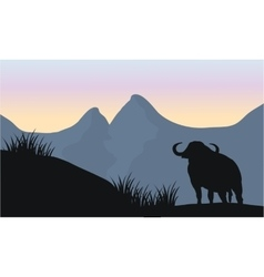One bull silhouette of scenery vector