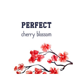 realistic sakura blossom - japanese red cherry vector image vector image
