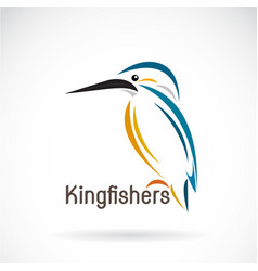 kingfishers alcedo atthis on white background vector image