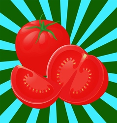 tomato sectional vector image