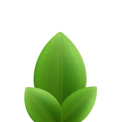 Plant three realistic green leaves isolated on vector