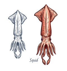 Squid seafood isolated sketch icon vector