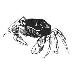 Hand sketch crab vector image