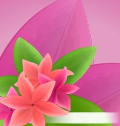 pink and red frangipani plumeria exotic flowers vector image