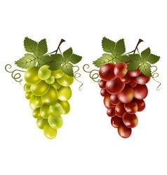 Red and green grape vector