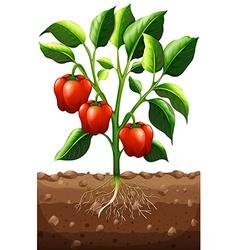 Capsicum plant on the farm vector