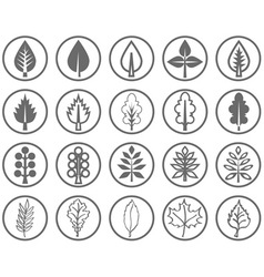 leaves of the tree vector image vector image