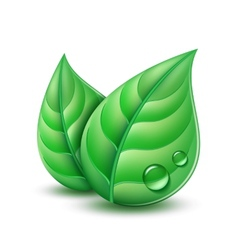 Two green leaves vector image