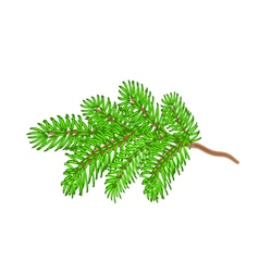 Christmas spruce twig tree symbol celebration vector image vector image