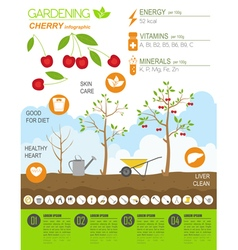Gardening work farming infographic cherry graphic vector