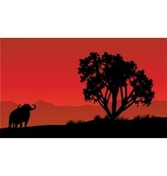 Single bull silhouette in fields vector
