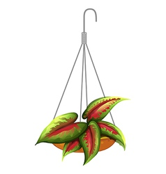 A hanging plant vector image