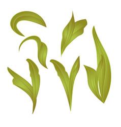leaves lily vintage set first botanical vector image vector image