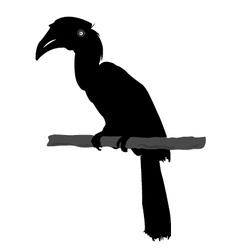 hornbill silhouette vector image vector image