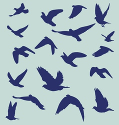 Silhouetted flying bird vector