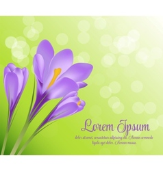 crocus flower background vector image