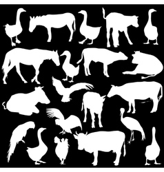 Black set silhouettes zoo animals collection on vector image