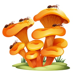 Fungi with ants vector