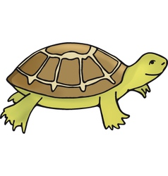 tortoise vector image vector image