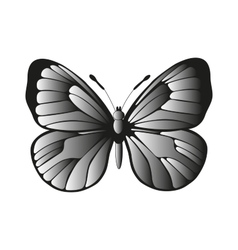 Black butterfly picture vector image