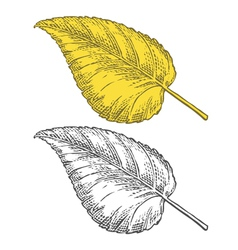 Autumn leaf in engraving style vector