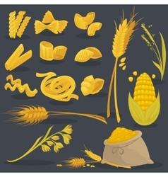 set foods of wheat Italian cuisine vector image