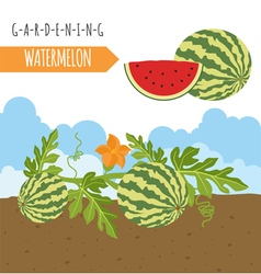 Gardening work farming watermelon graphic template vector