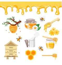 beekeeping and honey vector image