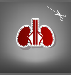Human anatomy kidneys sign red icon with vector
