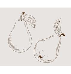 Pears 2 sketch vector image vector image