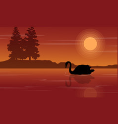 Silhouette of swan at sunset landscape vector